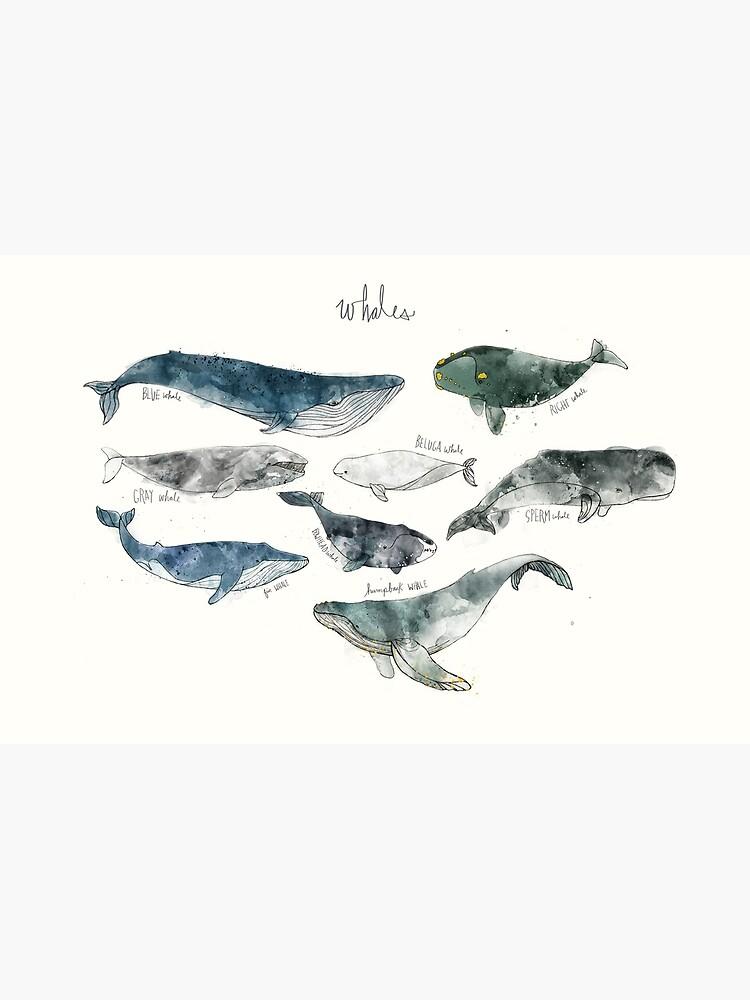 Wale von AmyHamilton