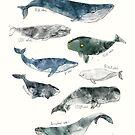 Wale von Amy Hamilton
