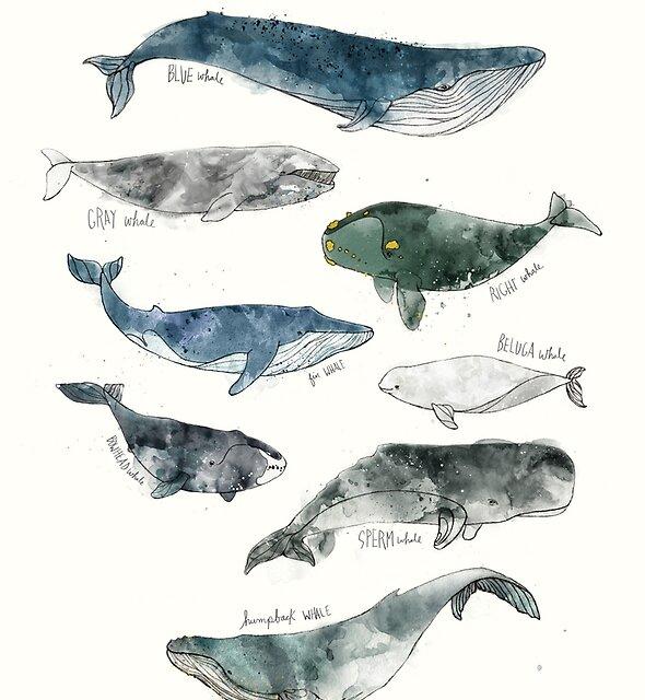 « Baleines » par Amy Hamilton