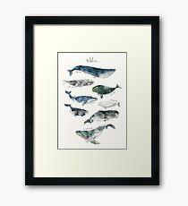 Whales Framed Print