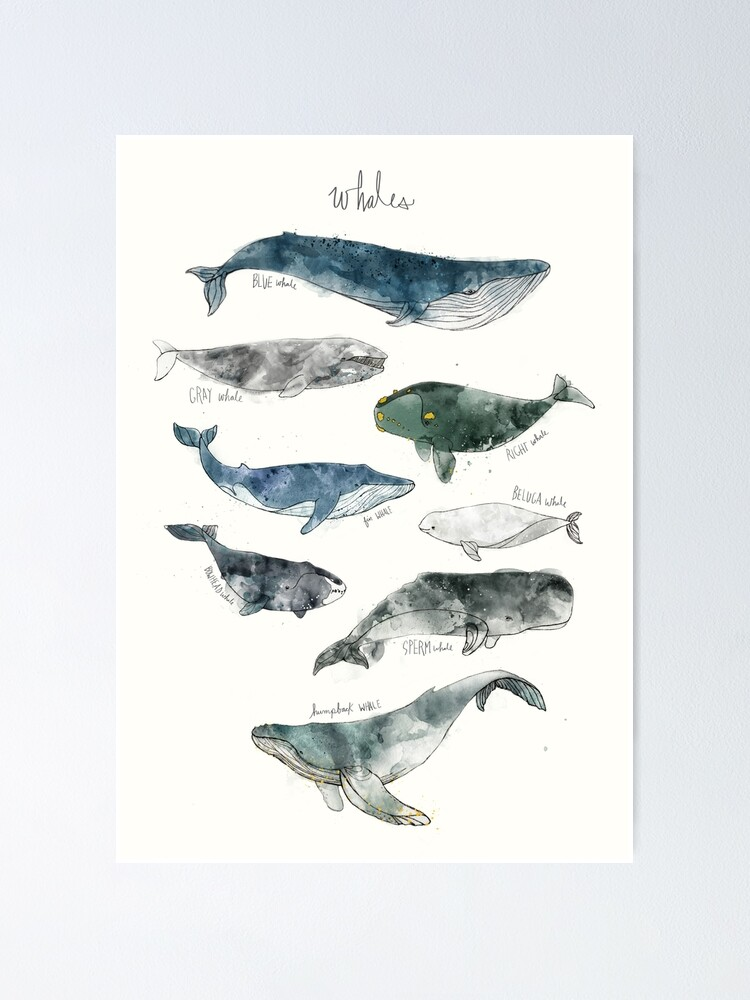 Alternate view of Whales Poster