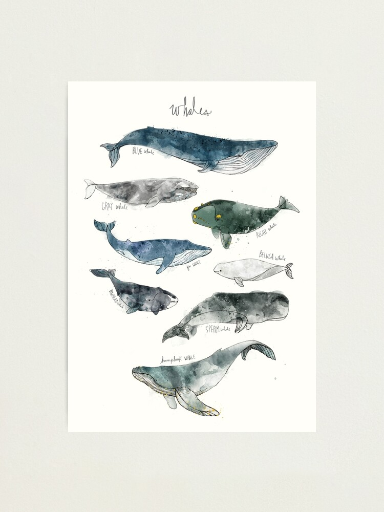 Alternate view of Whales Photographic Print