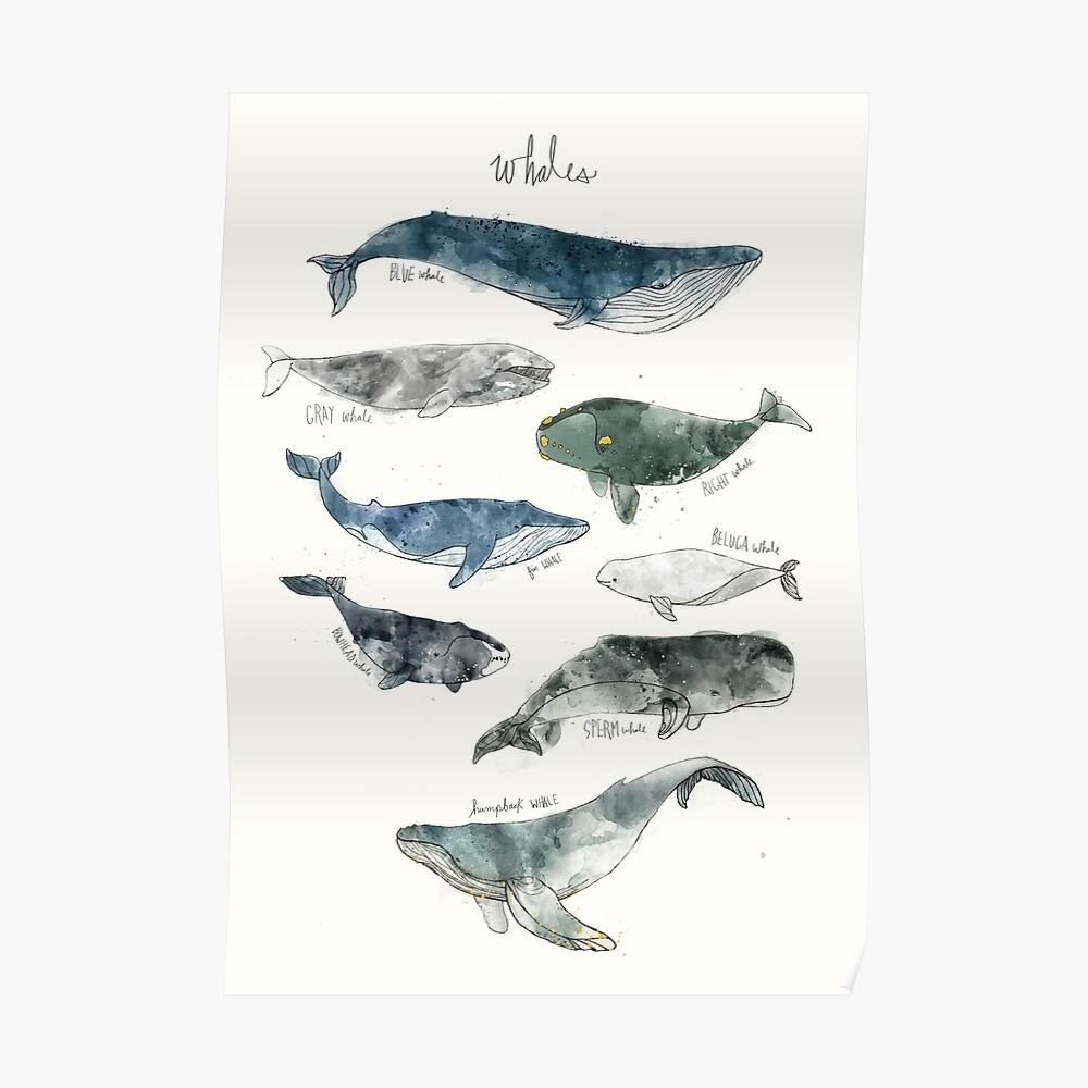 Ballenas Póster
