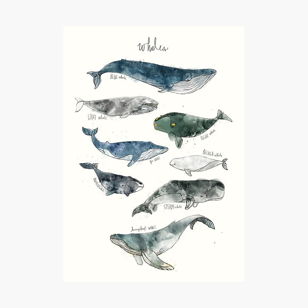 Wale Fotodruck