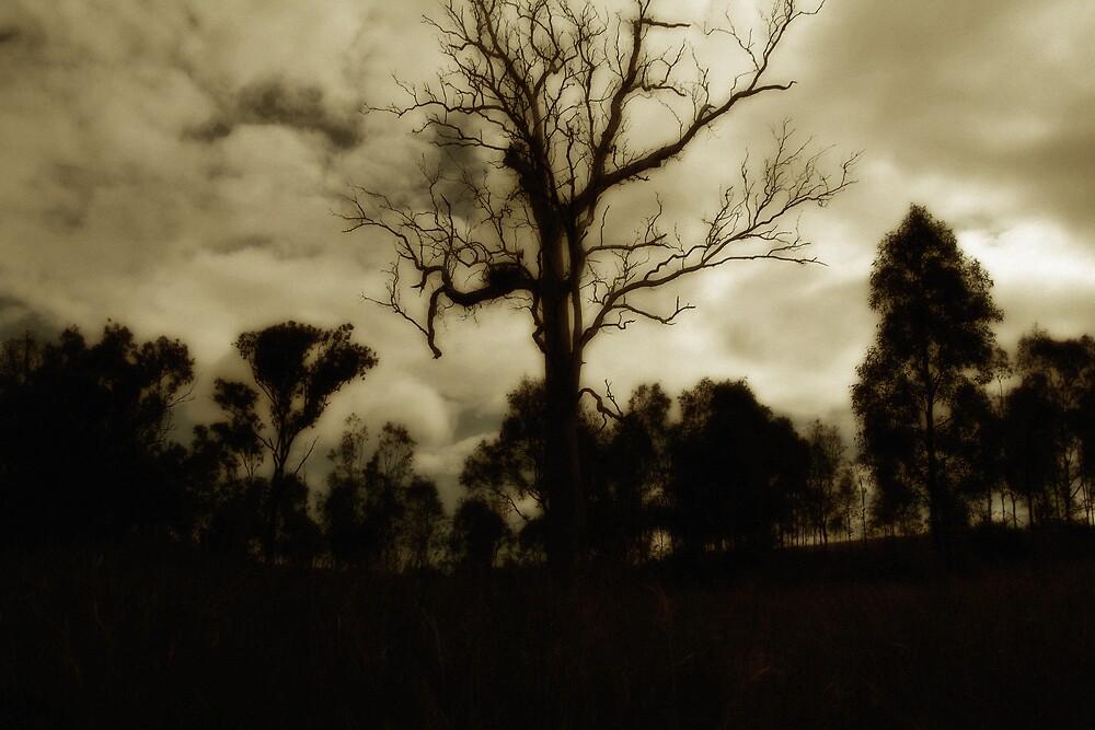 bush giants by Sheryleigh