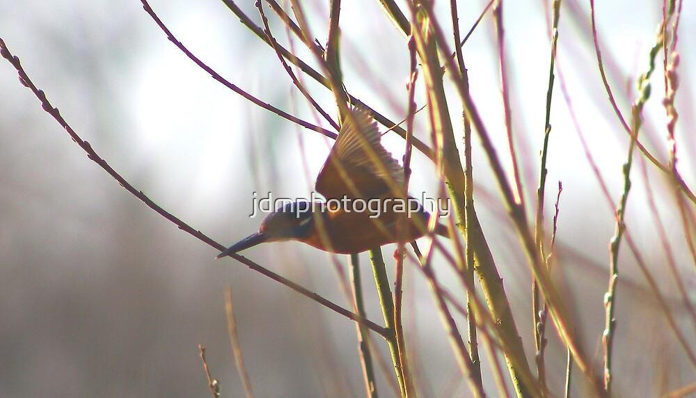 Kingfisher (flight) by jdmphotography