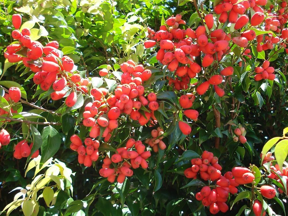 pink fruit by kveta