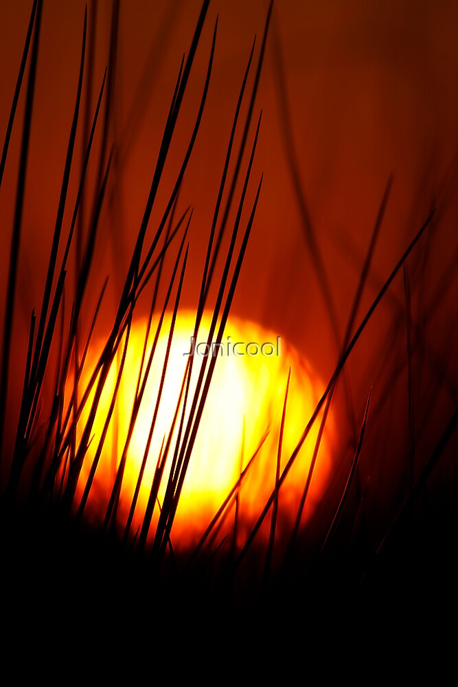 Behind the Reeds by Jonicool