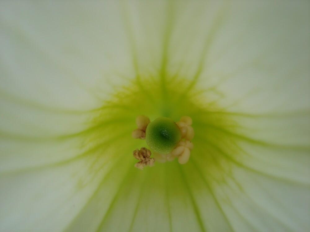 white  by kveta