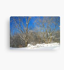 Blue Sky Winter Scene Metal Print