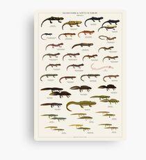 Salamanders & Newts of Europe Canvas Print