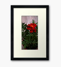 0300 - HDR Panorama - A Red Flower Framed Print