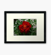 0302 - HDR Panorama - A Red Flower 2 Framed Print