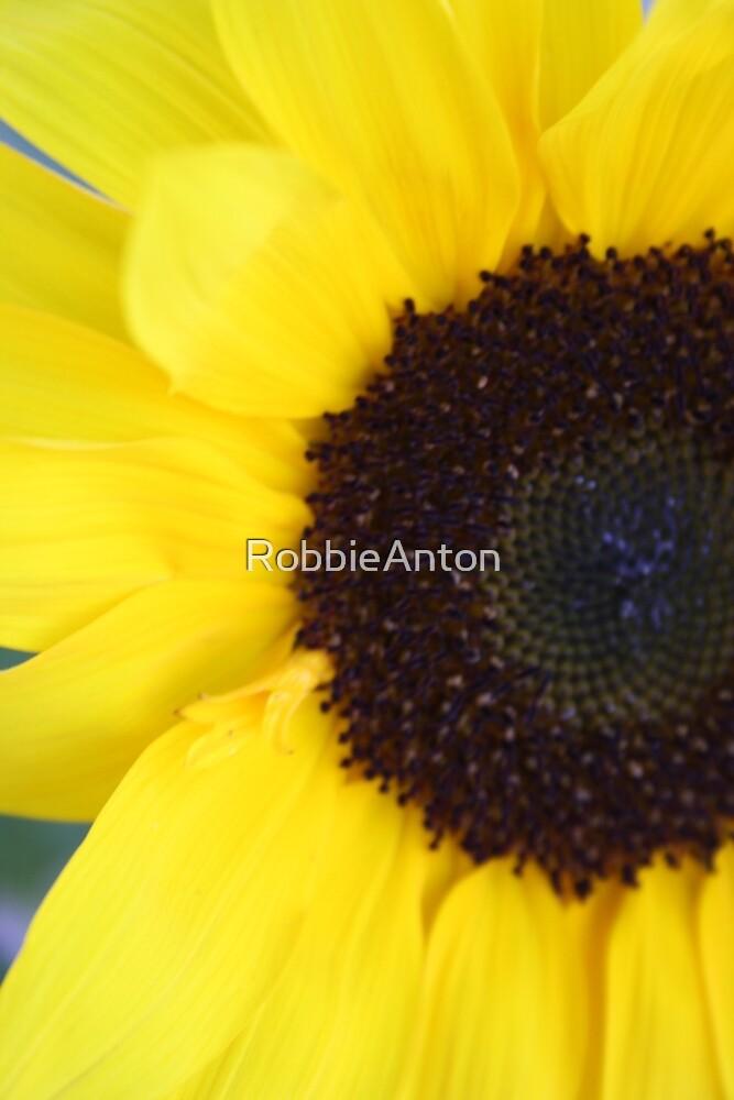 Sunflower by RobbieAnton