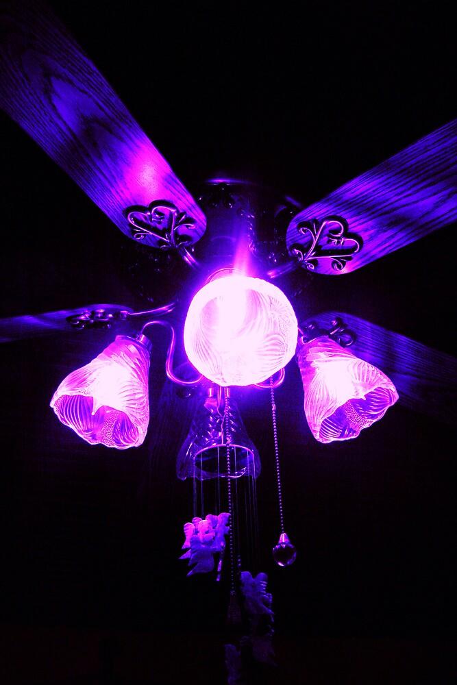 Purple fan,accidental shot,but turned out good by mel1forjon