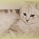 Erinnerungen an meine Kitty von Evita