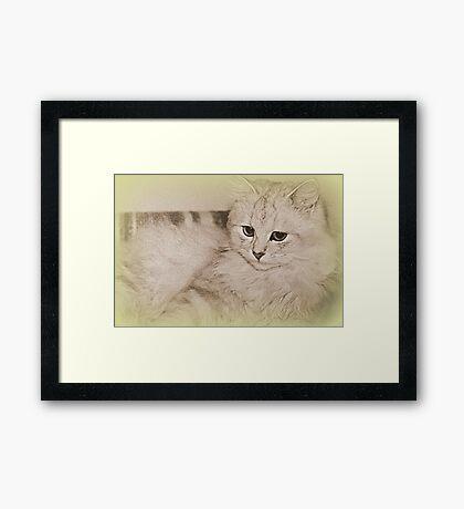 Erinnerungen an meine Kitty Gerahmter Kunstdruck