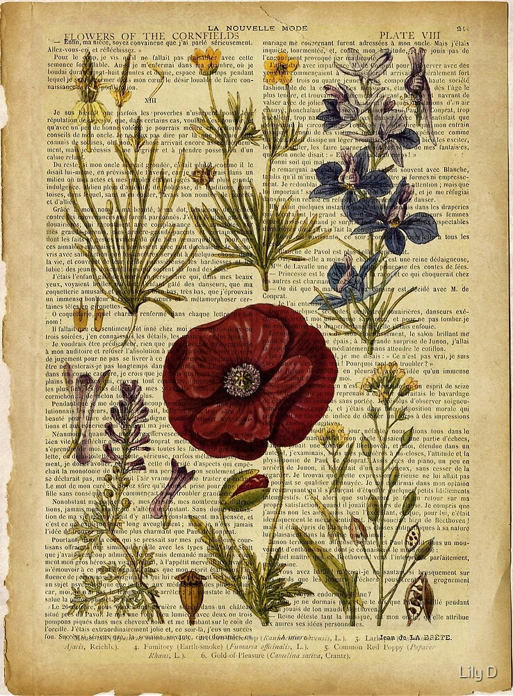 Botanical print, on old book page - flowers by Art Dream Studio