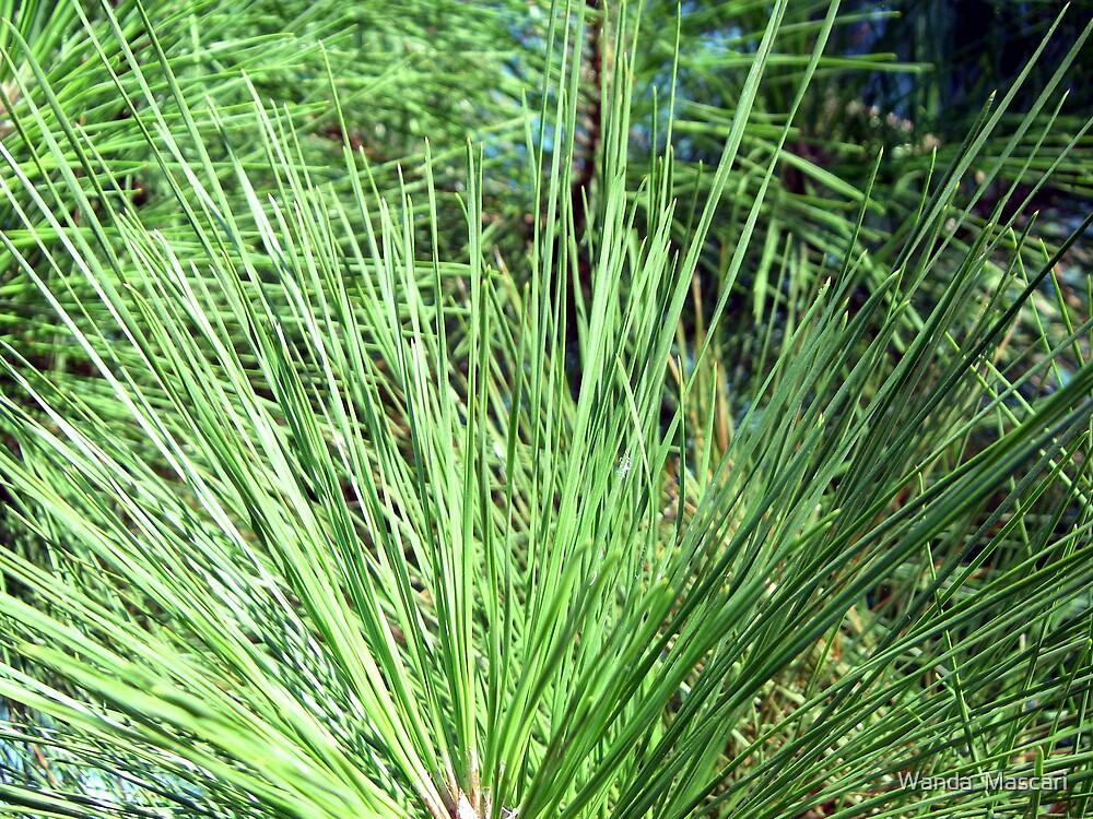 Pine Needles   by Wanda  Mascari