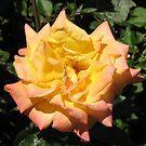 Joyous Rose von BlueMoonRose