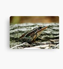 Southern Lepoard Frog Canvas Print