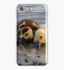 Ducklings, Lake at The Hammocks, Kendall, Florida, USA iPhone Case/Skin