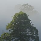 Trees in the Fog  by scholara