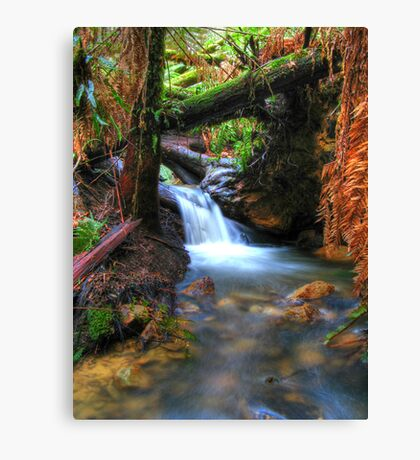 Hidden Treasure Canvas Print