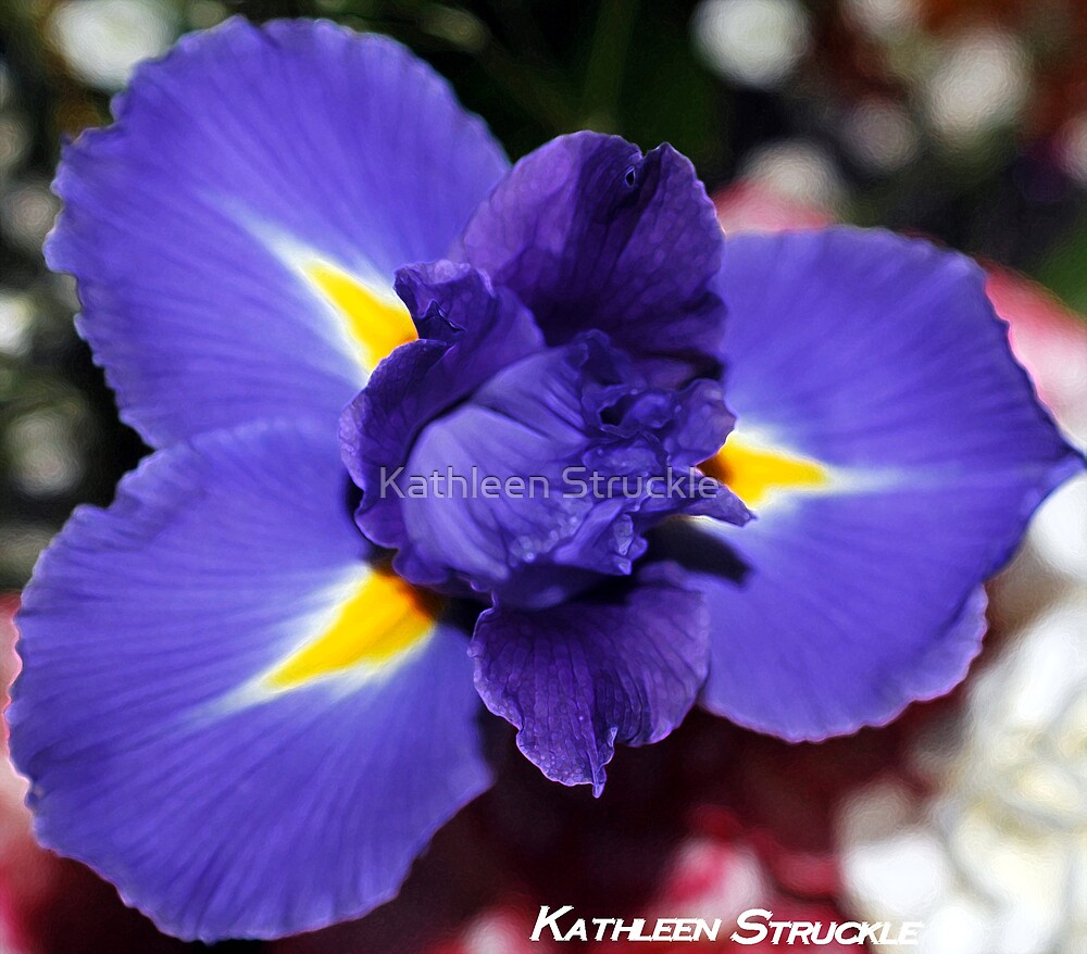 Delicate Iris by Kathleen Struckle