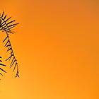 Tangerine Tree? by metriognome