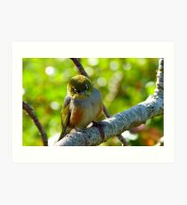 Lost in Deep Thought! - Silvereye - NZ Art Print