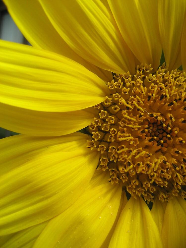Sunflower by Jadegirl