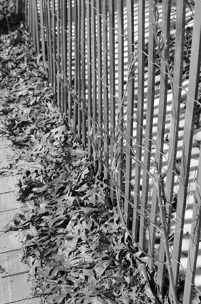 fence line by dyoung88