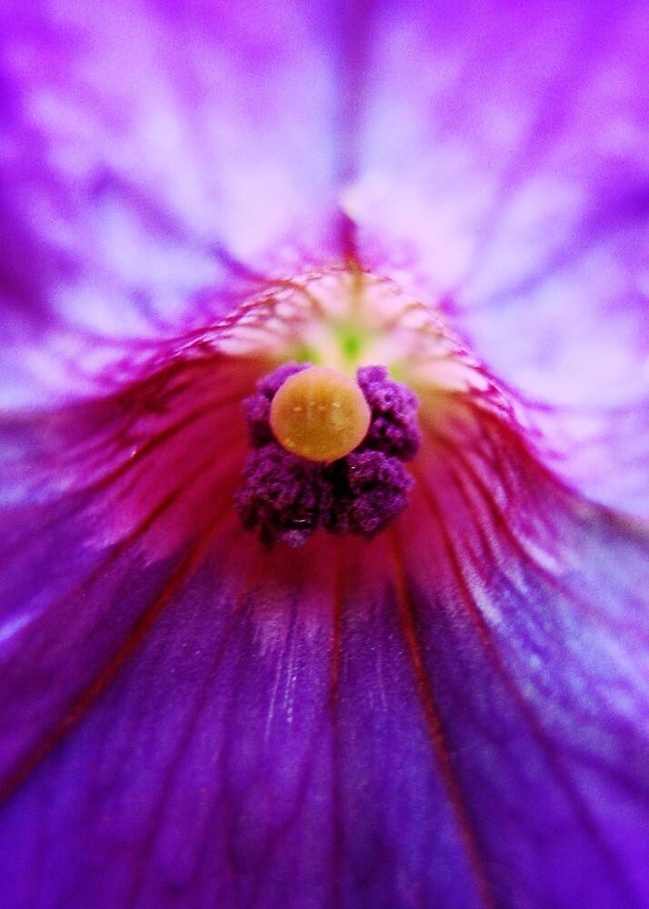 Violet Glow by Kobalt