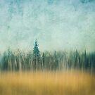 Last Year's Grass by Priska Wettstein