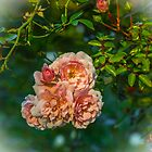Autumn Roses by Bette Devine