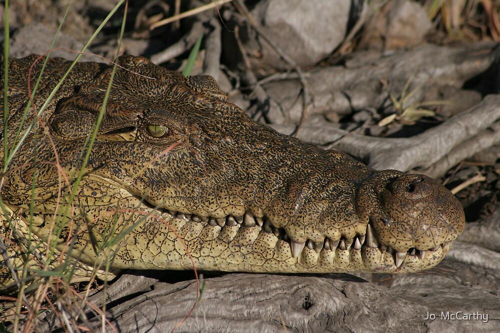 Croc Close Up by Jo  McCarthy