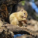 Now Where is my Tail...? by Christina Backus