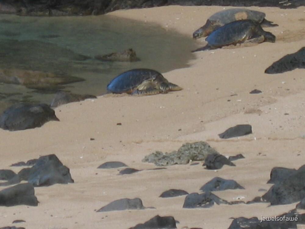 Sea turtles of Na Pali Coast by jewelsofawe