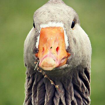 goose closeup by curiouskiwi