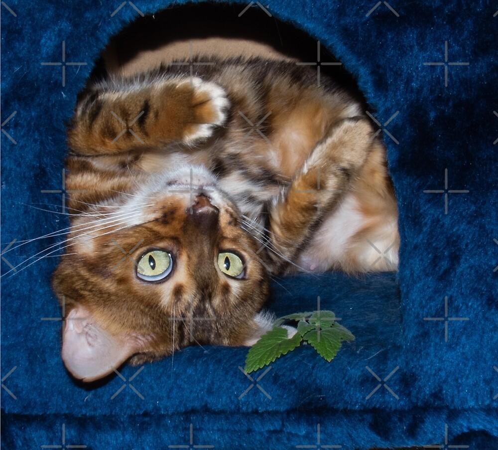 Trance on Catnip by Sandra Chung