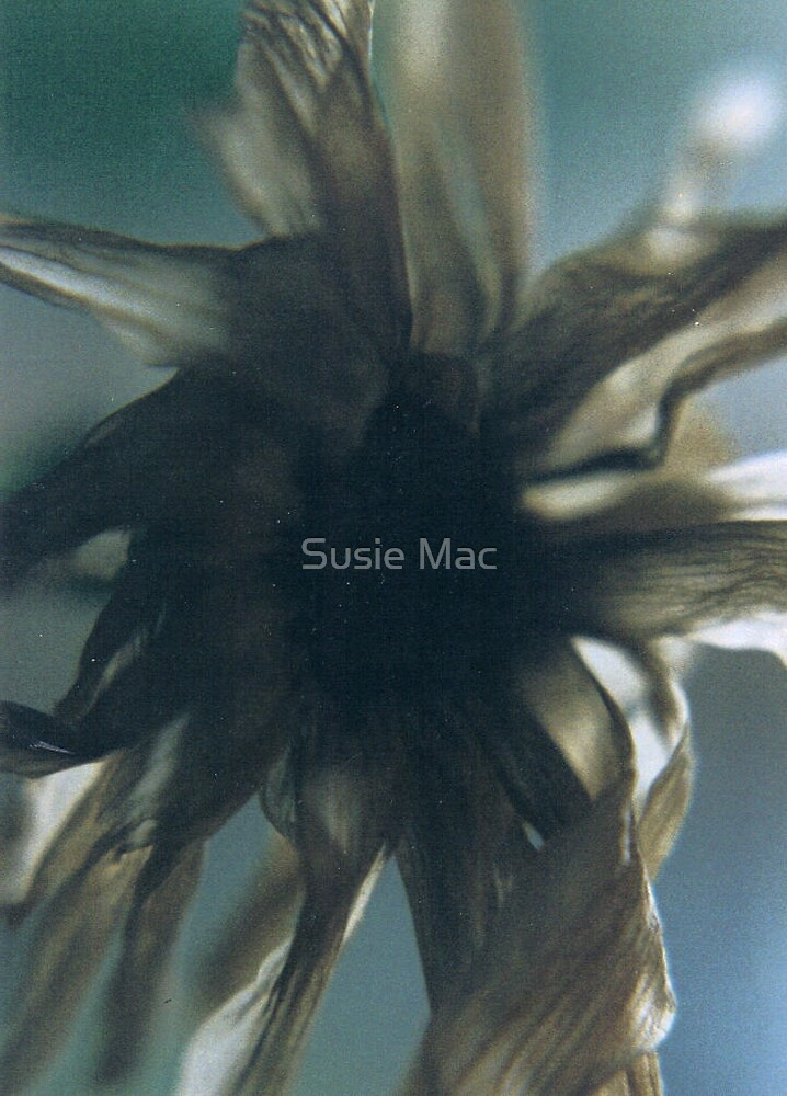 discarded by Susie Mac