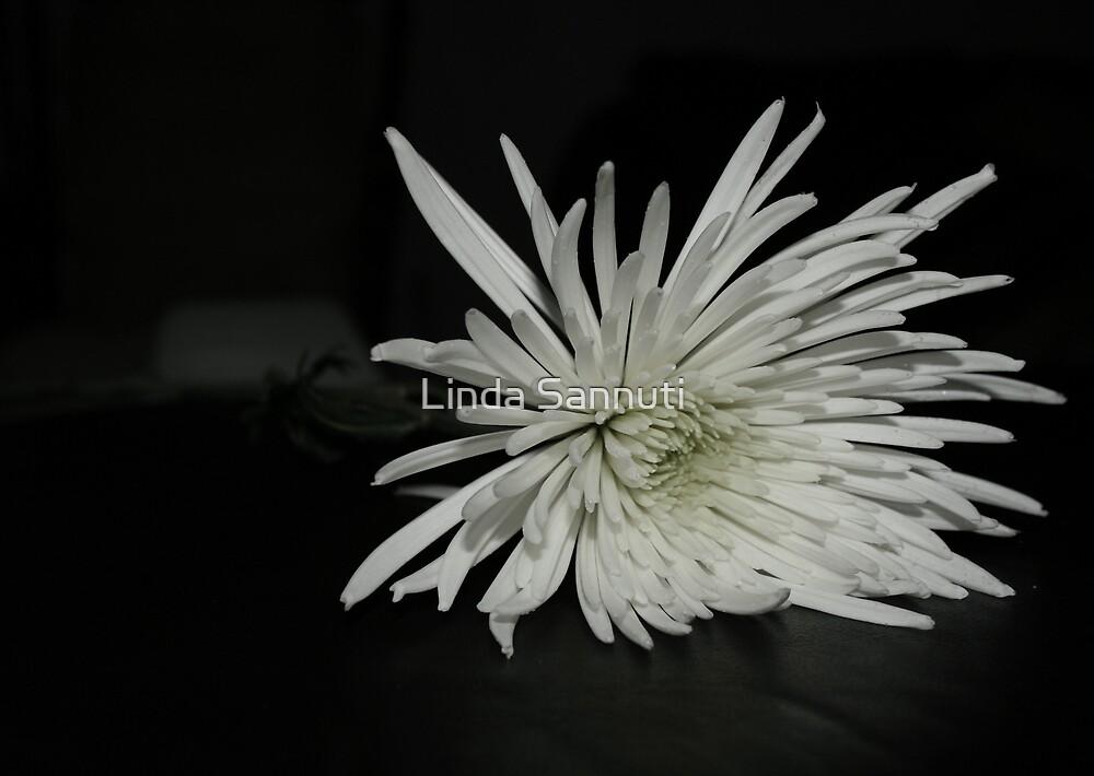 white beauty3 by Linda Sannuti
