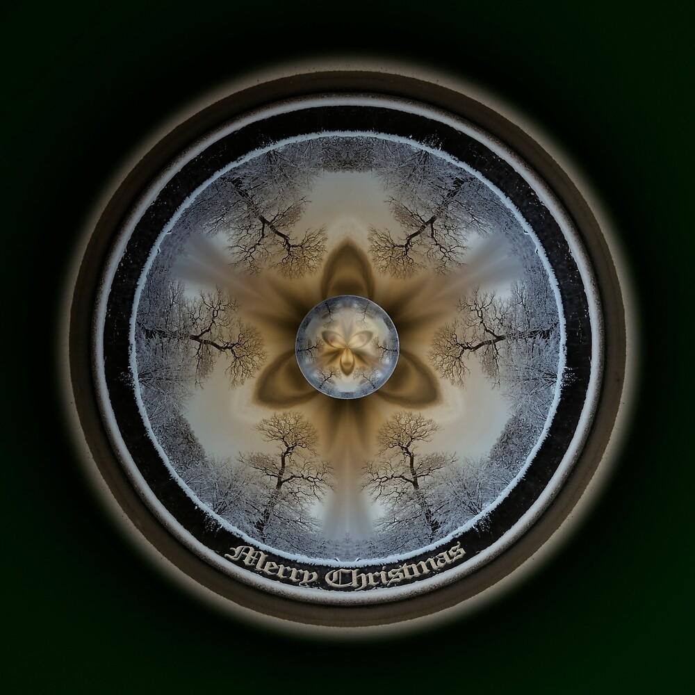 Hybrid Plate Winter Garscube Pelargonium by Neil Montgomery
