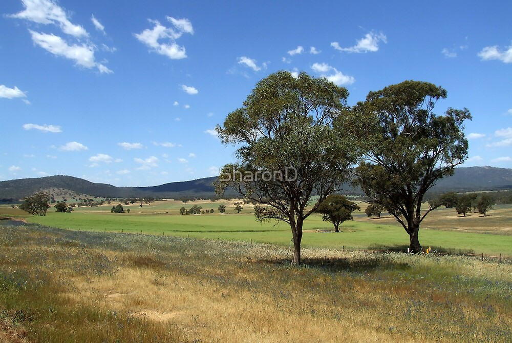 Aussie Landscape by SharonD
