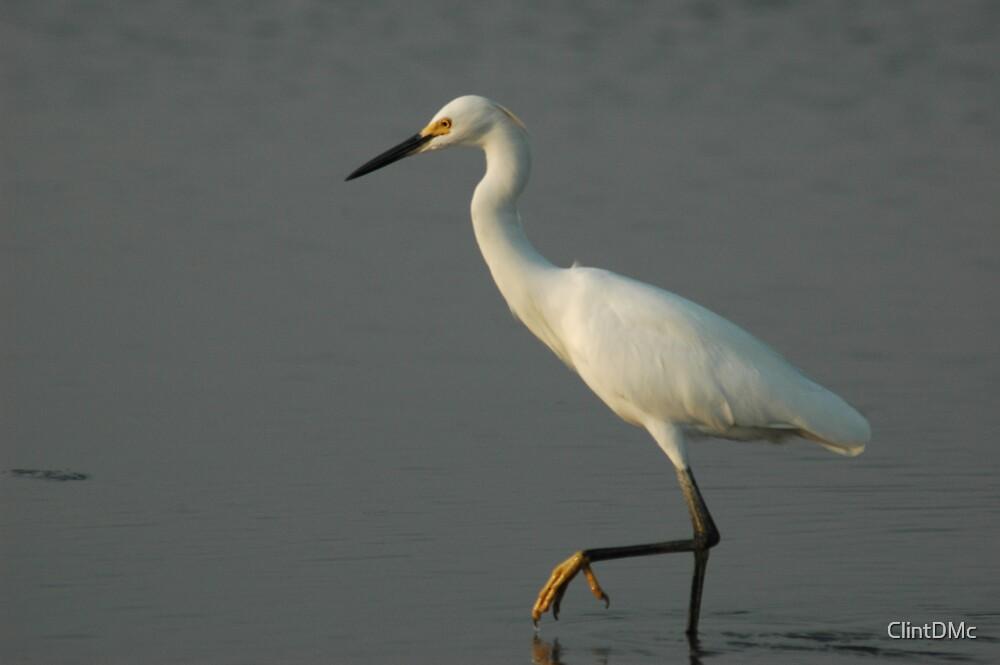 Snowy Egret by ClintDMc