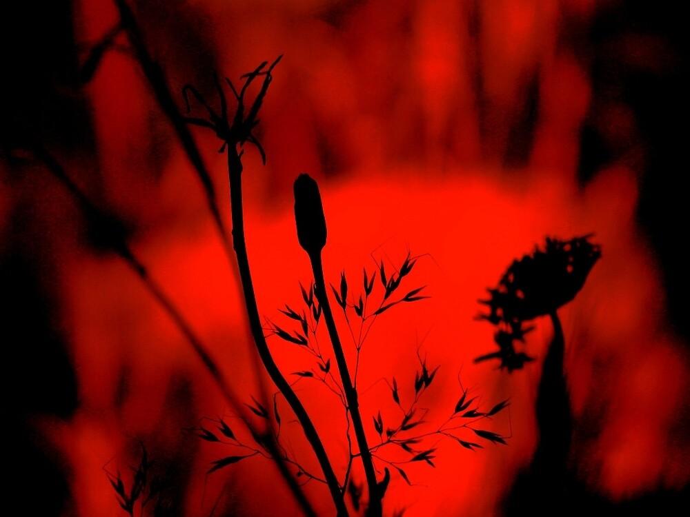 red sky by David Rozario