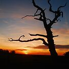 Solitary Tree by FelicityB