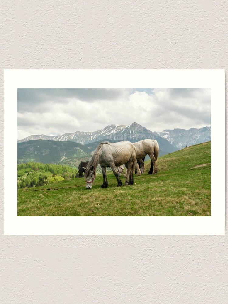 Alternate view of Keep grazing Art Print
