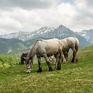 Keep grazing by Marcel Ilie